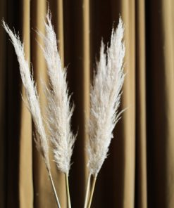 Pampas Grass Natural 1 pk - 90 / 110 cm