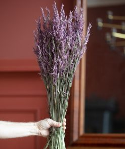 Haver Avena - Deep Purple - Lykkeblomster